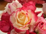 rose-13