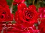 rose-16