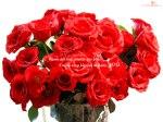 rose-17