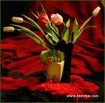 tulips-25