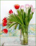 tulips-31