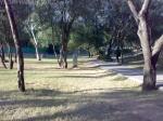 Trees in Damn-e-koh Islamabad