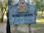 Monkeys can bite - Damn-e-koh Islamabad