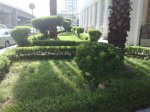 Greenery beside the road in Madina